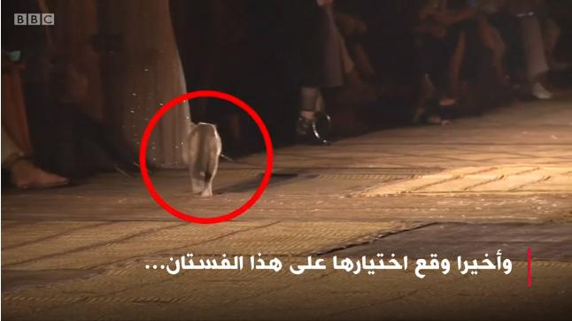قطة مراكشية بعرض كريستيان ديور